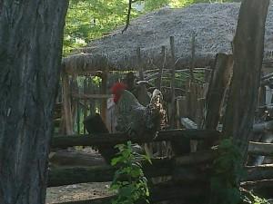 pusztaszer-pipacs-vendeghaz-5
